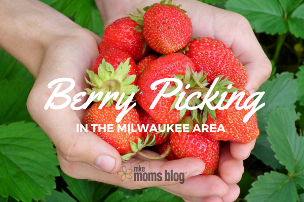 Milwaukee Berry Picking